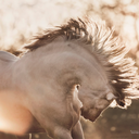 equine-images