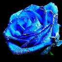 bluebellehope