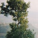 guamman8