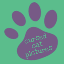 cursedcatpictures