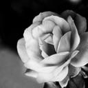 kalpnefes-blog1