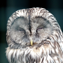 breakfast-owl