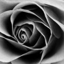therozereport-blog