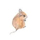 matchbox-mouse