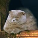 sweetsilvercat