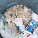 opossumtrash