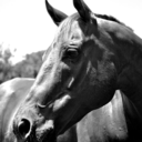 blueflint-equine
