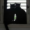 whensuddenlycats