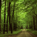 forestwithinaforest