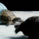 iceskatingturtle-blog