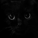 disreputable-cat