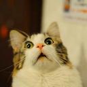 ladyhousecat