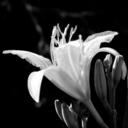 daisies-in-thedark