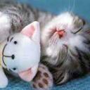 kittenever