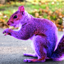 This is a picture of Purple Squirrel Land
