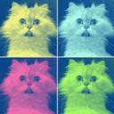 corporation-cats