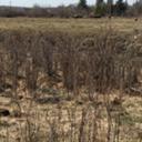 prairie-sage-sachet