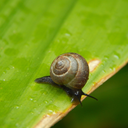 slightly-confused-snail