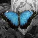 mariposasyhuracanesblog