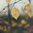 botanistweaklingold-blog