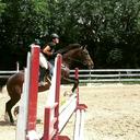 equinevetheart
