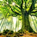 stickygreentree