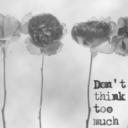 poppyvines