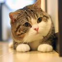 aww-cute-animals