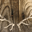 antler party