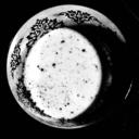 tea-and-bumblebees-13