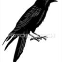 whataqueerbird