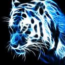 tigerroseblue