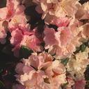 poeticamortis-blog