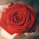 rosa-22