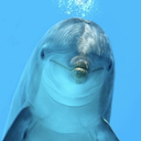 obscuredolphin