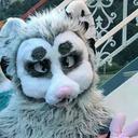 autieopossum