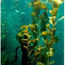seaweedslimfast-blog