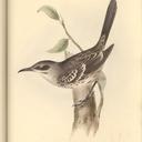 mockingbirdinside-blog-blog