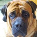 doggo-against-onision