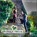 hedera-helix-live