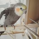 bird-senpai-blog