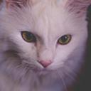 chervilwhisker-blog
