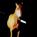 grumpy-mare