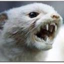 noisy-weasel