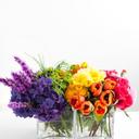 portion-of-the-rainbow-blog