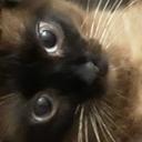 jr4cats