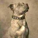 pitbullmyter-blog-blog