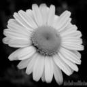 shrinkinglonelyfemme-blog