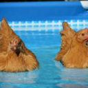 soggyswimchicks