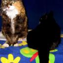 miaowlit